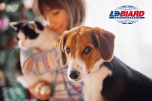Déménagement avec des animaux de compagnie : comment faire pour que tout soit ok ?